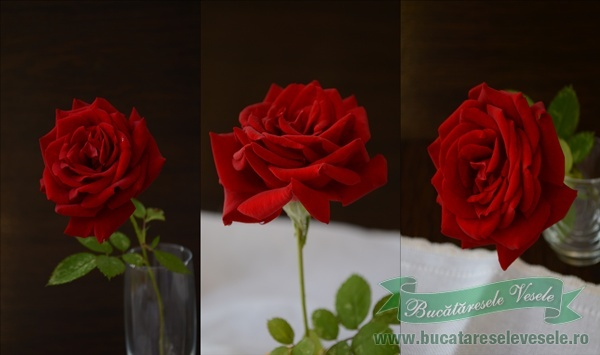 trandafir-rosu-1-1